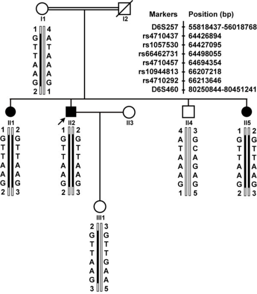 Pedigree structure and haplotype analysis at the RP25 locus. Blackened bars indicate the disease haplotype. Filled squares or filled circles represent male or female individuals affected with RP, respectively. Arrow points to the proband (II2). All patients in the arRP family carry the homozygous haplotype between single nucleotide polymorphisms rs4710292 and rs4710437. The genomic positions of two markers are from Human (Homo sapiens) Genome Browser Gateway, the GRCh37 build version, and six SNPs are from NCBI B37.1 assembly.