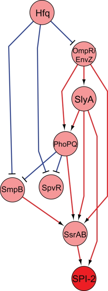 Regulatory network of selected transcription factors essential for virulence. Regulators essential in systemic infection were deleted and microarray expression data under SPI-2 inducing conditions were used to construct a regulatory network. The figure shown represents a selected subset of all the regulators examined (see Yoon et al., 2009 for the complete network). The nodes indicate regulators, with the red node indicating the SPI-2 genes. Edges indicate activation (red) or repression (blue). Predictions made by this model were validated experimentally (Yoon et al., 2009).