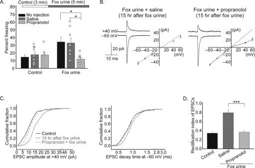 β-adrenergic receptors mediated the olfactory stimulus-induced change in synaptic AMPA receptor subtype. Mice were injected with propranolol or saline (as control) 15–30 min prior to the fox urine exposure. A. A natural olfactory stimulus, fox urine caused fear (measured as a freezing response). % freezing was calculated during the 3 min control and 5 min fox urine exposure period (n = 5; *, P < 0.01). B. Slices were prepared 15 hours after fox urine exposure. Synaptic currents and I–V relationship of EPSCs in stellate cells from the mice pre-injected with saline (n = 6) and propranolol (n = 6). C. Cumulative distribution of EPSC amplitude at +40 mV and decay time constant of EPSC at −60 mV of individual synaptic events from 6 cells under each condition (Kolmogorov-Smirnov test, P < 0.0001, 15 h vs. propranolol). D. Rectification index (***, P < 0.001). Error bars show ± s.e.m.