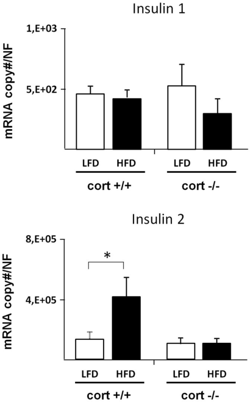 Expression profile of Insulin 1 and insulin 2 in pancreatic islets of cort+/+ and cort−/− male mice fed a low fat (LF) or high fat diet (HFD).Values represent mean ± SEM of copy number adjusted by β-actin expression per 100 ng of cDNA obtained from 2–3 animals per experimental group. (*: p<0,05).