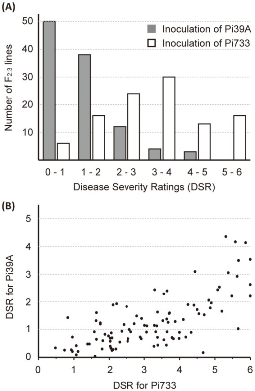 Disease severity rating (DSR) for isolates Pi39A and Pi733.(A) Distribution of DSR in the mapping population. (B) Relationship of the two DSR score sets generated from independent inoculations of Pi39A and Pi733.