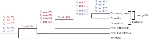 Evolutionary origin of sex-biased microRNA transcripts. Phylogenetic tree of Drosophila melanogaster and other animal groups. MicroRNAs emerging at a given lineage were shown over the relevant branches. For microRNA clusters, only the first microRNA is shown in the figure over the branch at which the oldest microRNA emerged. Red microRNAs are female-biased and blue are male-biased.