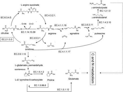Overview of the key reactions in eukaryotic arginine me | Open-i