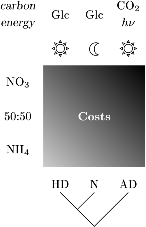 Schematic representation of the dependency of costs on the different investigated scenarios.Shown are the trends of amino acid synthesis costs for autotrophic and heterotrophic day (AD and HD) as well as night (N). The gradient represents the costs trend whereby lighter gray implies lower costs.