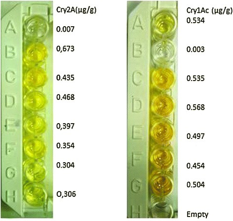 Quantification ofCry1AcandCry2Aprotein by ELISA.