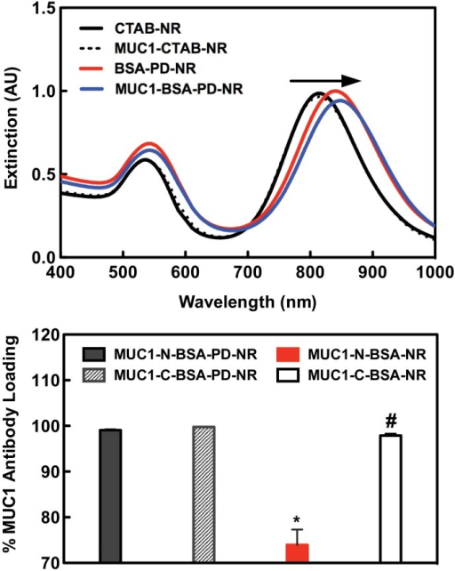Anti-MUC1 conjugation efficiency.(A) LSPR peak red shifting is observed with sequential BSA and anti-MUC1 modifications. (B) ELISA reveals total incorporation of MUC1-N and—C antibodies was achieved (* p < 0.05) only in PD-primed NRs additionally stabilized via a BSA layer. Near 100% loading in MUC1-C-BSA-NR samples has no practical significance as antibody addition induced complete NR aggregation (#). To quantify the differential MUC1 expression profiles in our cell lines, cells were treated with PE-conjugated MUC1 antibodies and analyzed via flow cytometry for their mean fluorescence intensities (MFI) against cells labeled with isotype controls. Both MCF-7 (MUC1++) and SCC15 (MUC1+) cells demonstrated an enhanced MFI in agreement with literature reports [16, 67, 68]. As expected, MUC1-deficient MDA-MB-231 (MUC1-) cells did not show an appreciable increase in anti-MUC1 PE labeling (Fig F in S1 File).