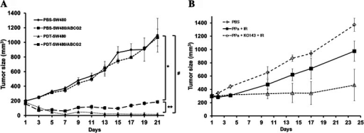 Antitumor effects of PDT in in vivo experiments. a, SW480 and SW480/ABCG2 cells were collected and subcutaneously injected into BALB/c nude mice. The sizes of tumors were measured using a caliper, tumor volume was calculated using the formula: 0.523 × length × width2 (mm3). b, HT-29 cells xenografted in nude mouse were treated with PBS alone, PPa + irradiation with or without Ko-143 pretreatment. Combined treatment of PPa with Ko-143 enhanced the sensitivity of HT29 cell to PDT. Data are means ± SEM from n = 4 (*P < 0.05, **P < 0.01, #P < 0.0001)