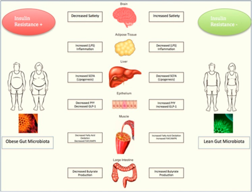 Gut microbiota and its influence on obesity.
