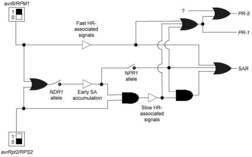 "Boolean representation of signaling network The binary switches used to represent allele status at the NPR1 and NDR1 loci were rendered according to standard depictions in engineering texts. All other symbols are according to Genoud, Trevino Santa Cruz and Métraux [24]. Signal generators were rendered as rectangles with black boxes inside them set at one or zero. ""Or"" gates, indicating that either input is sufficient to give the specified output, were rendered as bullet shapes with concave left sides. ""And"" gates, indicating that both inputs are required to give the specified output, were rendered as bullet shapes with flat left sides. Signaling outputs that also serve as inputs to downstream events were rendered as open triangles. Branches in the pathway were indicated with filled circles to suggest the resemblance to contact points in electrical circuit diagrams."