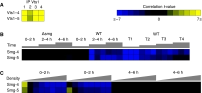Vts1p and Smaug activities. Each square represents the strength of the correlation between genome-wide occurrences of a SCRE and genome-wide mRNA measurements for a particular microarray experiment. Yellow represents a positive correlation and blue represents a negative correlation. An absolute t-value of about 6.7 corresponds to a P-value of 0.01, when strictly correcting for the number of motifs tested. (A) The Vts1p specificities for the length four loop (Vts1–4) and length five loop (Vts1–5) were discovered using microarray data measured mRNA association with Vts1p in a pull-down experiment in four trials (Aviv et al, 2006b). (B) The Smaug specificities for the length four (Smg-4) and length five (Smg-5) loops were discovered using mRNA expression microarray data performed over Drosophila melanogaster embryonic development. The first two time courses measured the first 6 h of development in Δsmg and wild-type (WT) activated eggs (Tadros et al, 2007). The third time course (Pilot et al, 2006) compares the slow phase (T1), fast phase (T2), cellularization and beginning gastrulation (T3), and end of gastrulation (T4) to embryos before zygotic transcription begins in wild-type (WT) embryos. (C) Occurrences of the Smg-4 and Smg-5 specificities also had strong negative correlations (corrected P-value <0.001) with ribosome association in the first 2 h of development (Qin et al, 2007). Triangles represent increasing density of sucrose gradient fractions, corresponding to increasing numbers of ribosomes.