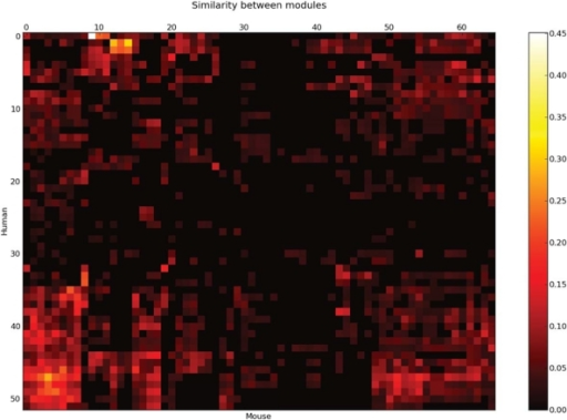 All-to-all comparison of modules between human and mouse.The heat map (bi-clustered) displays a globally low similarity between the inter-species modules. The similarity between a pair of module is calculated by Eqs. (1).
