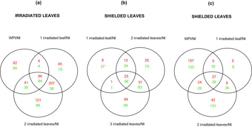 Transcriptome changes in irradiated and shielded leaves from plants with different canopy leaf exposure. Up-regulated genes are red, down-regulated genes are green. (a) Intersection of genes differentially expressed in irradiated leaves. (b and c) Intersection of genes differentially expressed in shielded leaves. Each sample was compared to plants under control conditions with no UV-B (NI).