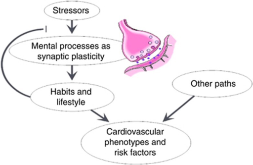 Hypothetical model of the interaction between stress, synaptic plasticity, substance use, obesity and related cardiovascular outcomes. Stressors can change the efficacy of mental processes such as synaptic plasticity. However, other environmental factors, such as substance use, modify the sensitivity of synaptic plasticity to the stressors. In the long term, the combined effects of genetic variations in the synapses and environmental factors shape an individual's lifestyles and habits. Conversely, the established habits and lifestyle influence the body and eventually modify health status outcomes, including cardiovascular disease and cardiovascular risk factors phenotypes as obesity. Nonetheless, there are other factors that modify cardiovascular outcomes through different mechanisms. A full color version of this figure is available at the Hypertension Research journal online.