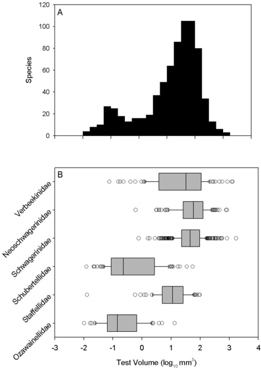 Size distribution of Middle Permian fusulinoidean species, showing bimodal, left-skewed distribution resulting from differences in size and diversity among families.(A) All species. (B) Size distributions of families. Boxes present interquartile range, with median indicated by a black line. Whiskers indicate 5th and 95th percentiles. Species beyond the 5th and 95th percentiles are indicated individually.