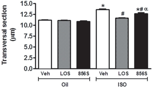 Effects of CGEN-856S and losartan administration on the cardiomyocyte diameters of isoproterenol-treated rats.Animals were treated with isoproterenol (ISO) for 7 days to induce heart hypertrophy or with olive oil as a control. The effects of CGEN-856S were compared to those of saline as a negative control (Veh) or losartan (LOS) as a positive control. Values are expressed as mean ± standard error of the mean (SEM), n = 4−5 animals. *P<0.05 vs. oil +Veh; #P<0.05 vs. ISO+Veh; αP<0.05 vs. ISO+LOS.