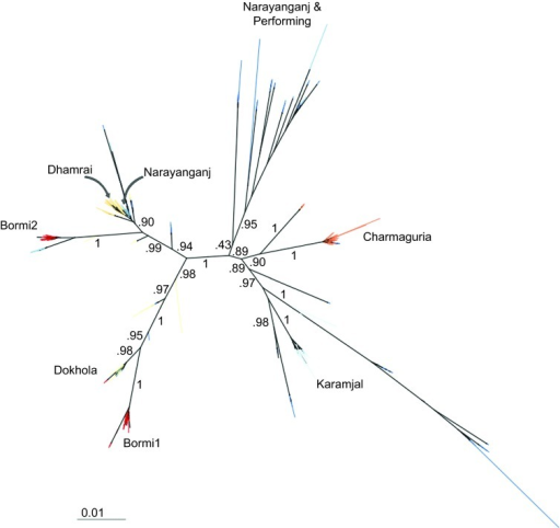 Foamy virus sequence diversity overview. Phylogenetic tree built from all sequenced gag nucleotide clones using FastTree using the Jukes–Cantor sequence evolution model. Due to recombination, this tree should not be interpreted as an evolutionary history, but rather as an indication of the clustering seen in the sequence data. The edges of the tree are labeled with SH-like local supports.