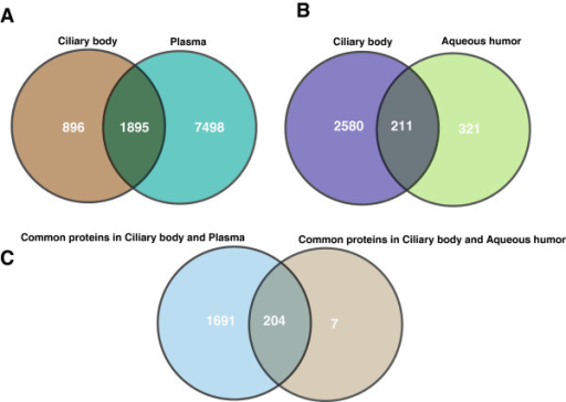 Comparison of the ciliary body proteome with the aqueous humor and plasma proteome. Panel A shows comparison of the ciliary body proteins with plasma proteins annotated in the Plasma Proteome Database. Panel B depicts comparison of the ciliary body proteome with aqueous humor proteome annotated from the published literature. Panel C shows a comparison of proteins that are common to the ciliary body and plasma with those that are common to the ciliary body and the aqueous humor.