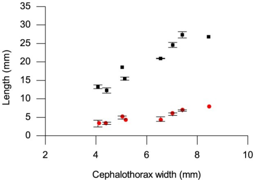Original length of spider duct and portion testing positive for chitin plotted against cephalothorax width.Original length of duct (black squares), portion testing positive for chitin (red circles). Error bars show standard deviations of length measurements.
