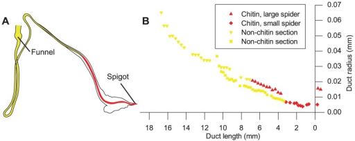 Chitin location within the spider duct.(A) Tracing of spider duct, showing portion solubilised by acid in yellow and section remaining after KOH treatment and testing positive for chitin highlighted in red. (B) Duct profile of both and early and late spider instars from Figure 2 in Davies, Knight et al. 2013, with valve positioned at x = 0. The symbols (red diamonds early instar; red triangles late instar) are for the part of the duct that stains for chitin and the yellow from the remainder of the duct that is destroyed in the test. This indicates that the surviving region is confined to the section of the duct that narrows linearly in both early and late instar spiders.