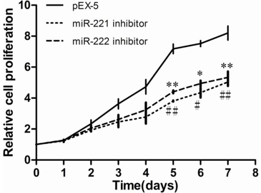 Effects of miR-221 inhibitor and miR-222 inhibitor on PC-3 cell proliferation.PC-3 cells were transfected with empty vector plasmid (pEX-5), miR-221 inhibitor, or miR-222 inhibitor. Cell proliferation was analyzed using a CCK-8 assay. The proliferation of cells transfected with miR-221 inhibitor or miR-222 inhibitor was reduced compared with that transfected with pEX-5. Data represent the mean value ± SEM from three separate experiments. *,# P<0.05 vs pEX-5, **,## P<0.01 vs pEX-5.