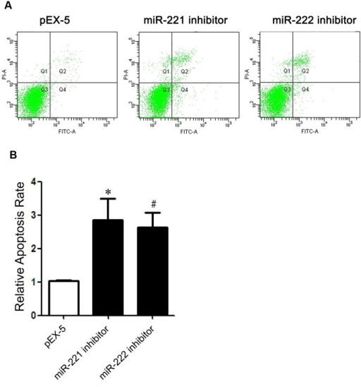 Effects of miR-221 inhibitor and miR-222 inhibitor on apoptosis.(A) Apoptotic cell distribution of PC-3 cells transfected with pEX-5 miR-221 inhibitor or miR-222 inhibitor by flow cytometry. (B) Relative apoptosis rate of each group. Data represent the mean value ± SEM from three separate experiments.(*,# P<0.05 vs pEX-5.