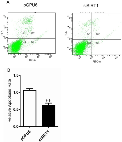 Effect of down-regulation of SIRT1 on apoptosis.(A) Apoptosis was measured by flow cytometry inPC-3 cells transfected with pGPU6 or pGPU6-siSIRT1. (B) Relative apoptosis rate of each group. Data represent the mean value ± SEM from three separate experiments. **P<0.01 vs pGPU6.
