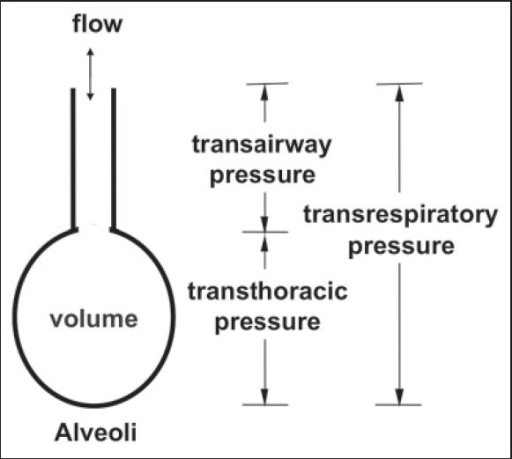 Alveolar diagram showing various pressures involved in inspiration/expiration. The same are either provided or overcome by the ventilator