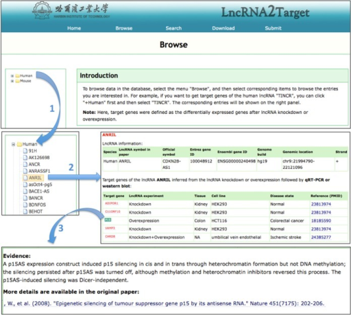Screenshot of how to browse the target genes of lncRNA 'INRIL'.