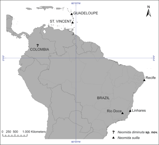 Distribution map for Neomidadiminuta sp. n., represented by an interrogation symbol (?), without specific locality, and Neomidasuilla, represented by a triangle (▲).