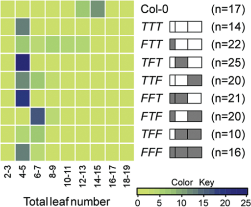 Flowering times of homozygous transgenic plants overexpressing FT/TSF chimeric proteins. Distribution of flowering time of FT/TSF chimeras under LD conditions, presented as a heat map. The structure of each chimeric gene is shown next to the name of each construct. Sequences of FT and TSF are shown as grey and open boxes, respectively. n = number of plants measured. F: region originating from FT; T: region originating from TSF.