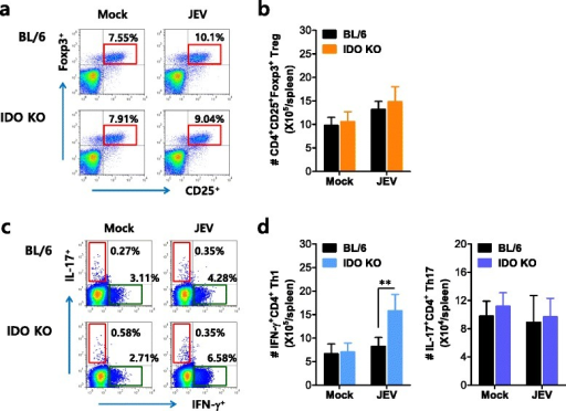 IDO induces a skewed IFN-γ+CD4+ T-cell response during JE. a, b The frequency and number of CD4+Foxp3+ Tregs in the spleen of IDO-ablated mice. The frequency (a) and absolute number (b) of CD4+Foxp3+ Treg cells in the spleen of wild-type and IDO KO mice were determined by flow cytometric analysis 5 dpi. The values in the representative dot plots show the average percentage of CD25+Foxp3+ cells in CD4+ T-cells; the bar charts denote the average number ± SD of CD4+Foxp3+ Tregs in the spleen derived from at least four mice per group. c, d The frequency and number of IFN-γ+CD4+ Th1 and IL-17+CD4+ Th17 cells in the spleen of IDO-ablated mice. The frequency and number of IFN-γ+CD4+ Th1 and IL-17+CD4+ Th17 cells were determined by intracellular cytokine staining of the splenocytes prepared from wild-type and IDO KO mice 5 dpi in response to PMA + ionomycin stimulation. The values in the representative dot plots show the average percentage of the indicated cell populations after gating on CD4+ T-cells; the bar charts denote the average number ± SD of IFN-γ+CD4+ Th1 and IL-17+CD4+ Th17 cells in the spleen derived from at least four mice per group. **p < 0.01 compared with levels in the indicated groups