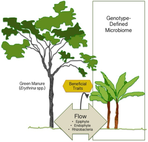 The Plant Microbiome Is Mainly Defined By Genotype But It Can Be Manited