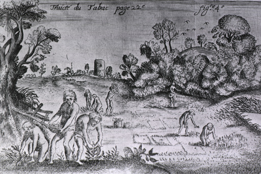 <p>Crude depiction of several groups of Indians variously planting and harvesting tobacco.</p>