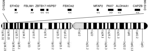 Ideogram of chromosome 1 showing approximate location of the linkage region and each candidate gene. The flanking microsatellite markers are shown. The direction of transcription of each gene is indicated with arrows below the symbol. Note that gene size and position are approximate only. Sixty genes are found in this region in total.