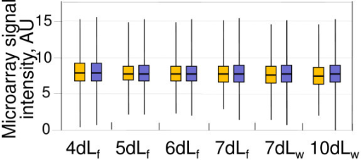 Lack of global X-chromosome inactivation in developing testes. Expression of X-linked (orange) and autosomal (blue) genes was measured as signal intensity of corresponding microarray probes, after normalization. cDNAs hybridized to the microarrays were isolated from testes of either feeding (f) or wandering (w) larvae grown for the indicated number of days at 18°C. The analysis traces the first wave of germline differentiation; pupation indicative of the meiotic divisions occurred at day 11.