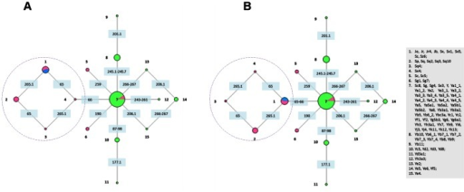 Clustering of Alu subfamilies using indel markers.The blue slice of node 1 represents the oldest subfamilies (AluJ). AluS elements are represented in pink and members of the young AluY are shown in green. Sites of mutational events are shown in blue boxes in the network's branches. Networks A and B are the result of size heterogeneity in positions 65 and 66: (A) assuming that the three combinations resulted consecutively (65–66 ins –65 del –66 del) and (B) assuming that they were independent events (65–66 ins –65 del and 65–66 ins - 65–66 del). Networks A and B differ only in the right reticulation (circled) and the branch that connects it to node 7.
