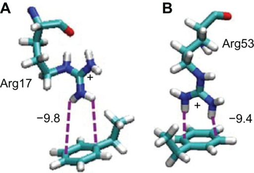 Snapshots of the interactions between Arg residues and the PS surface included in the Fab–Fab–on orientation.Notes: Arg17 and Arg53 in b-region are shown in (A) and (B), respectively.Abbreviations: Arg, arginine; PS, polystyrene; Fab, fragment antigen-binding.