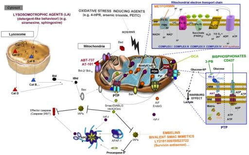 Drugs targeting mitochondrion or lysosome. The figure represents an overview of compounds aimed to induce tumor cell death by interacting with specific molecules (as shown in the figure), by inducing oxidative damage or permeabilization of the lysosomal membrane.