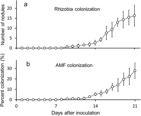Preliminary quantification of root-associated microbes. After destructive harvest of plants (n =7 plants per day; n =147 plants total) root colonization with (a) rhizobia (number of nodules) and (b) percent of roots showing arbuscular mycorrhizal fungi (AMF) colonization were quantified over a time period of 21 days. Values shown are means ± SD.