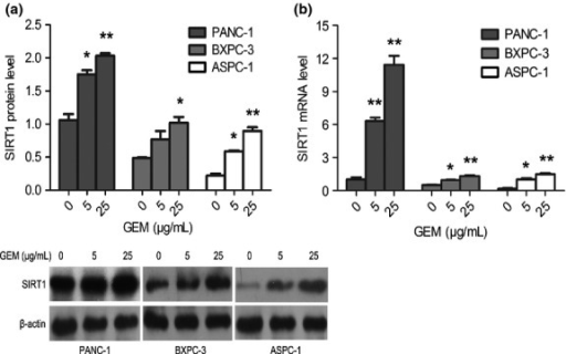 Induction of sirtuin 1 (SIRT1) in pancreatic cancer cell lines treated with gemcitabine (GEM). PANC-1, BXPC-3, and ASPC-1 cells were incubated with GEM (0, 5, 25 μg/mL) for 48 h. SIRT1 expression was monitored by Western blot analysis (a) and quantitative RT-PCR (b). The experiments were repeated twice and a representative result is shown. *P < 0.05, **P < 0.01 versus control group.