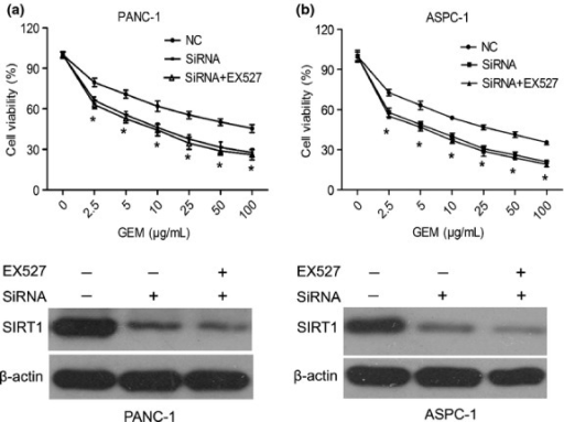 Chemosensitivity was induced in pancreatic cancer cells by EX527, through specifically deregulating the activity of sirtuin 1 (SIRT1). Downregulation of endogenous SIRT1 using RNA interference following EX527 (2 μM) treatment in PANC-1 (a) and ASPC-1 cells (b). The SIRT1 expression of siRNA plus EX527 treatment was also measured by Western blot analysis. All data are presented as means ± SD of three independent experiments. *P < 0.05 versus control group. NC, negative control.