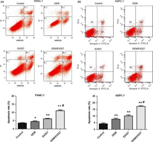 Effect of EX527 and (or) gemcitabine (GEM) on apoptosis of pancreatic cancer cells. PANC-1 (a) and ASPC-1 (b) cells were incubated with EX527 (2 μM) and (or) GEM (50 μg/mL) for 48 h. Cell apoptosis was monitored by annexin V staining and flow cytometry. The right lower quadrant of each plot represents early apoptotic cells and the right upper quadrant represents late apoptotic cells. The experiments were repeated twice with similar results. *P < 0.05, **P < 0.01 versus control group; #P < 0.01 versus single drug treatment.