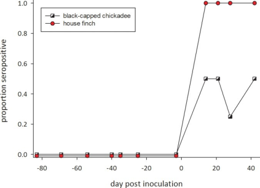 Proportion of individuals in which Mycoplasma gallisepticum-specific antibodies were detected using an RPA test after inoculation (on day 0) with a house finch strain of M. gallisepticum in 6 house finches (circles) and 4 black-capped chickadees (squares).The 4 control black-capped chickadees inoculated with Frey's medium remained negative throughout (not shown). On each date birds were scored as having (1) or not having (0) antibodies.