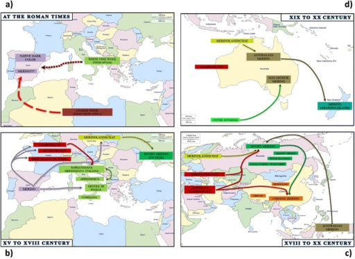 Synoptic scheme that summarizes the hypothetical origin and relationships between Merino and Merino-derived sheep populations at the Roman times (a) and from XV to XVIII century (b) in the Mediterranean area, from XVIII to XX century in Asia (c) and from XIX to XX century in Australia and New Zealand (d)