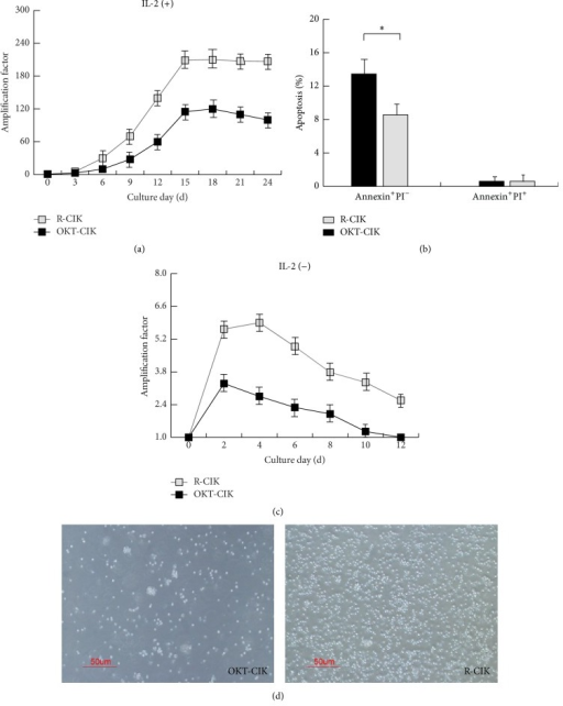 RetroNectin activated CIK cells had stronger proliferative ability. (a) Proliferative curve of OKT-CIK and R-CIK cells. The proliferative speed of R-CIK cells was much higher than that of OKT-CIK cells, n = 5. (b) Mean percentage of OKT-CIK and R-CIK cells undergoing early apoptosis (Annexin+PI−) and late apoptosis/necrosis (Annexin+PI+). ∗P < 0.05 for the comparison, n = 5. (c) Continual proliferative curve of OKT-CIK and R-CIK cells in medium without IL-2. R-CIK cells could continue expanding 4 days after IL-2 was withdrawn from the medium, and the maximum average amplification is 6 times. OKT-CIK cells could only continue expanding 2 days in the same condition, and the maximum average amplification is 3 times, n = 5. (d) Shape of cultured OKT-CIK and R-CIK cells (400x).