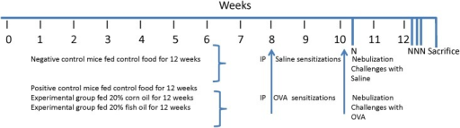 Time line for the experimental protocol.Mice continued to eat their respective foods throughout the allergen sensitization and challenge period. They were sensitized with saline or OVA at 8 and 10 weeks, and then challenged by nebulization with saline or OVA once at 10 weeks and on three consecutive days during week 12. Mice were sacrificed 24 h after the final nebulization.