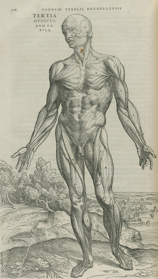 <p>Standing nude male figure in landscape; muscles delineated</p>