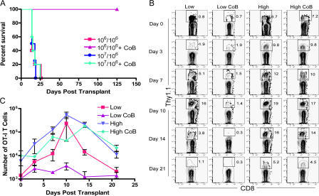 Decreased OT-I T cell expansion in the presence of CTLA-4 Ig/anti-CD154 after priming at low, but not high, antigen-specific precursor frequency. 106 or 107 OT-I T cells (along with 106 OT-II cells) were adoptively transferred into naive B6 recipients that then received an mOVA skin graft. (A) Results showed that mice receiving a low frequency (106) of OT-I T cells were protected from rejection by CTLA-4 Ig/anti-CD154, whereas mice receiving a high frequency (107) rapidly rejected their grafts (P < 0.001). (B) Analysis of the percentage of Thy1.1+ CD8+ T cells in the DLN revealed that costimulation blockade inhibited the expansion/accumulation of OT-I T cells in mice responding from low frequency, whereas the expansion/accumulation of OT-I cells responding from high frequency was not as potently affected. (C) Absolute numbers of OT-I T cells isolated from the DLN showed a convergence at the peak of expansion at day 10 in both the low and high frequency untreated groups as well as the CTLA-4 Ig/anti-CD154–treated high frequency group. In contrast, the low frequency, CTLA-4 Ig/anti-CD154–treated group exhibited minimal expansion of OT-I T cell numbers. These data are representative examples of four independent experiments, with two to three mice per group, per time point, per experiment.