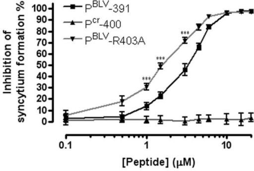 Substitution of a single arginine residue with alanine yields an improved inhibitor. The syncytium inhibition activity of the peptides Pcr-400, PBLV-391 and the derivative peptide PBLV-R403A was examined. The percentage syncytium inhibition following co-incubation of cells with the peptides is shown. Syncytia were counted in 10 low-power light microscope fields. Data points show the mean ± SD of triplicate assays. The asters show the data points for which the p values were calculated (see main text).