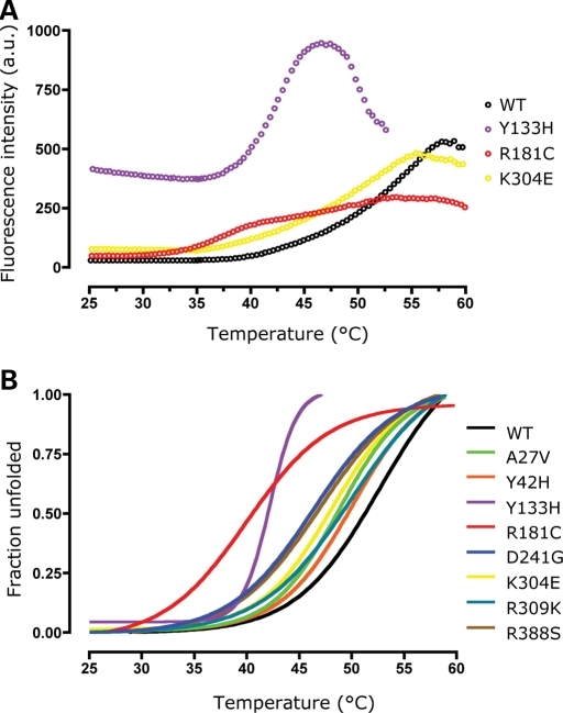Variant MCAD proteins show accelerated thermal denaturation and partial protein unfolding in the ground state for some variants. Thermal unfolding of wild-type (WT) and variants monitored by ANS fluorescence. (A) ANS fluorescence profiles of wild-type, Y133H, R181S and K304E. Intensities of the fluorescent dye ANS, which binds to hydrophobic groups of the protein presented upon unfolding, are plotted as a function of increasing temperatures. Ground-state fluorescence was markedly increased for Y133H and, to a lesser extent, for R181C and K304E indicating an increased hydrophobicity due to partial unfolding of these variants already in the native state. (B) Thermal denaturation of all variants analyzed. Fractions of unfolded protein are plotted as a function of increasing temperatures and the transition midpoints represent the temperature at half denaturation (fraction unfolded 0.5). All variants showed a marked to moderate left-shift of the curves implying an increased propensity to unfold upon thermal stress (Table 5). In addition, Y133H showed accelerated unfolding as indicated by the steeper slope of the curve and complete denaturation at 46°C.